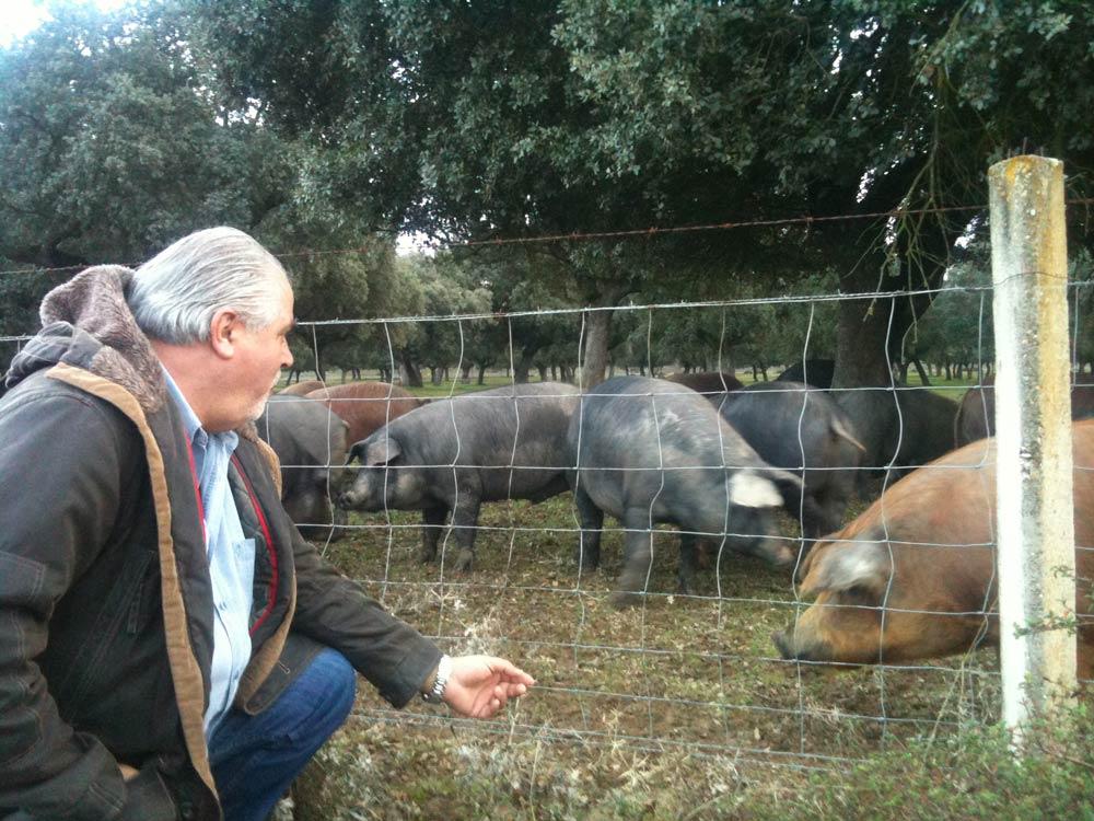 cochon-iberique-bellota