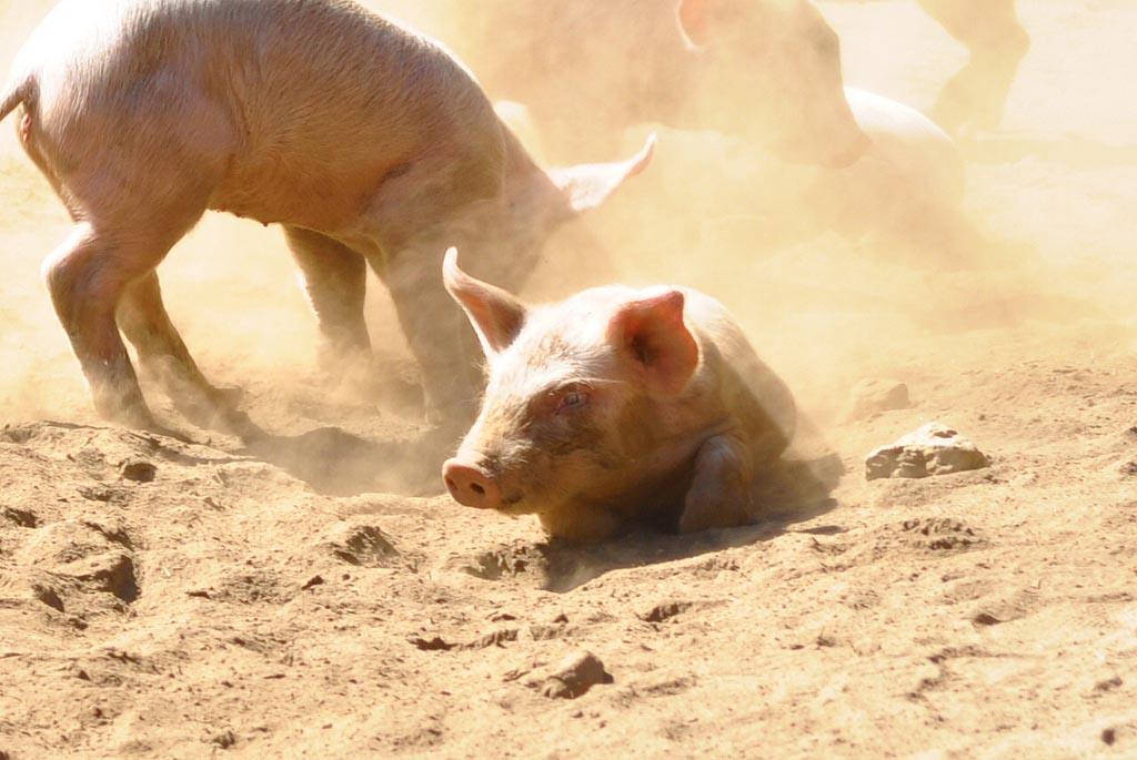 Le jambon Serrano Bodega et Reserva : en savoir plus !