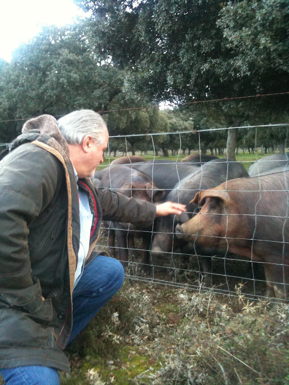 Porc ibérique : tout savoir sur cet animal !